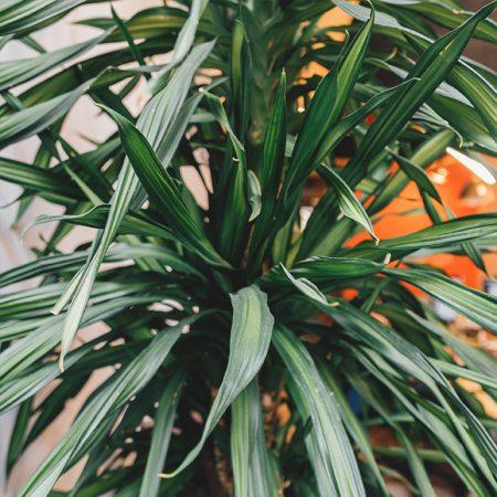 foto: plant